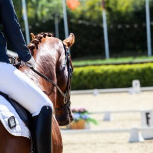 High Speed Camera Consultation: Horse and Rider