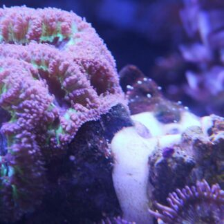 AquaMaxx Reef Welder Epoxy Glue - Regular - 1000mL