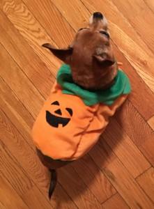 CharliePumpkinLounge