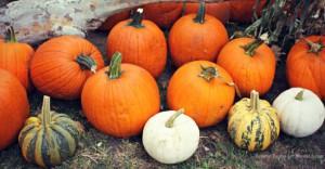 PumpkinPatchesLounge