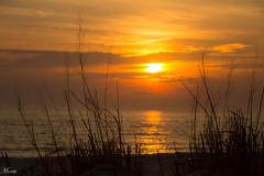 Backlit-Dune