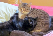 cats-lex1