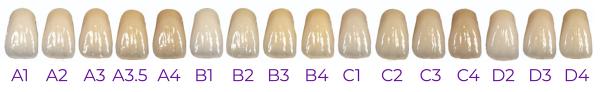 teeth-chart