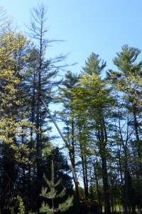 Trees at Grant's Woods