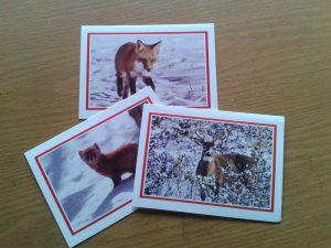 holiday-cards-800x600