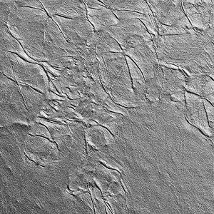 Nasturtium tile detail