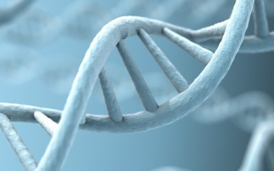 Methylation Status as an Indicator of Cellular Aging