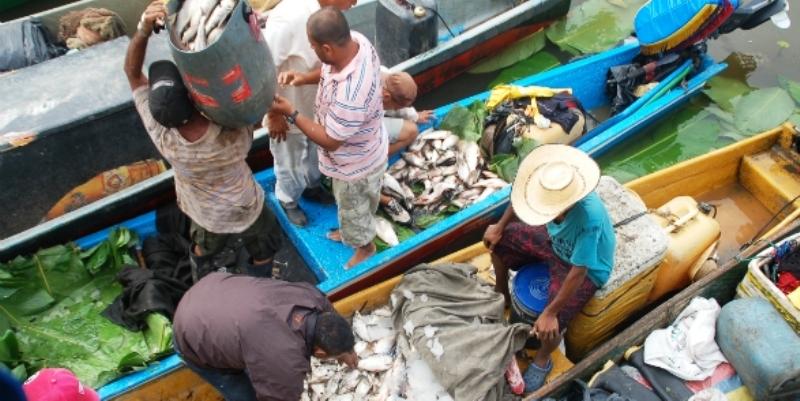 UMATA pide a pescadores respetar las tallas mínimas de los peces