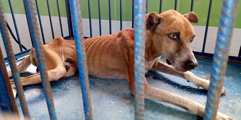 Piden al gobernador que no deje morir de hambre a perros que cuidaban Ferticol