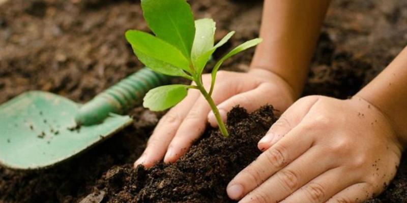 Plantar un árbol: nuevo reto en internet para ayudar al planeta