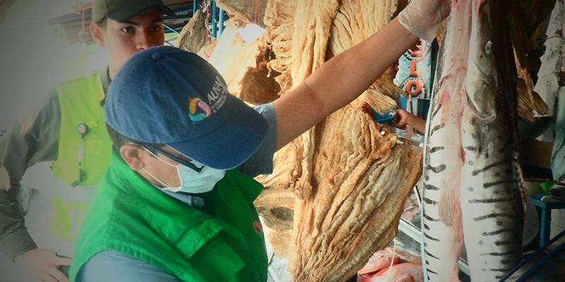 Inicia la segunda veda de bagre rayado en el Rio Magdalena