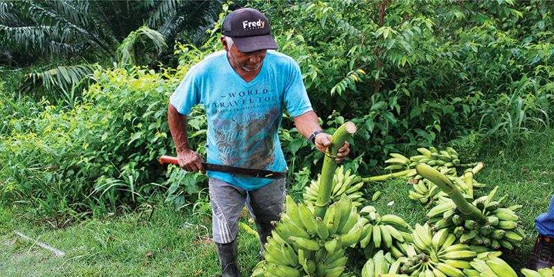 Éxito reportan organizadores del Mercado Campesino Virtual