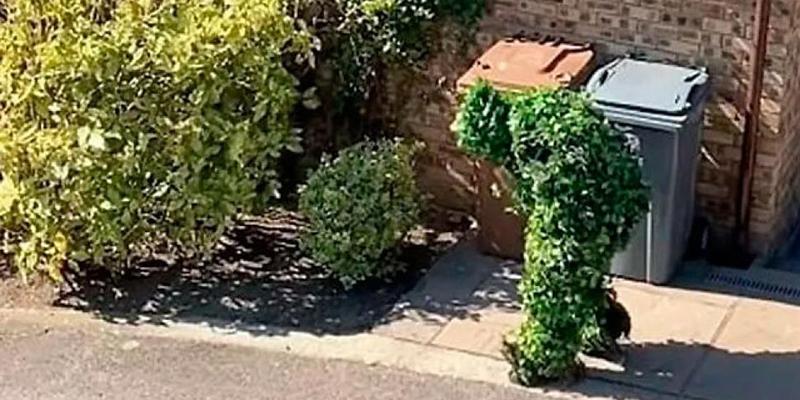 Se disfrazó de arbusto para evadir la cuarentena y sus vecinos lo pillaron
