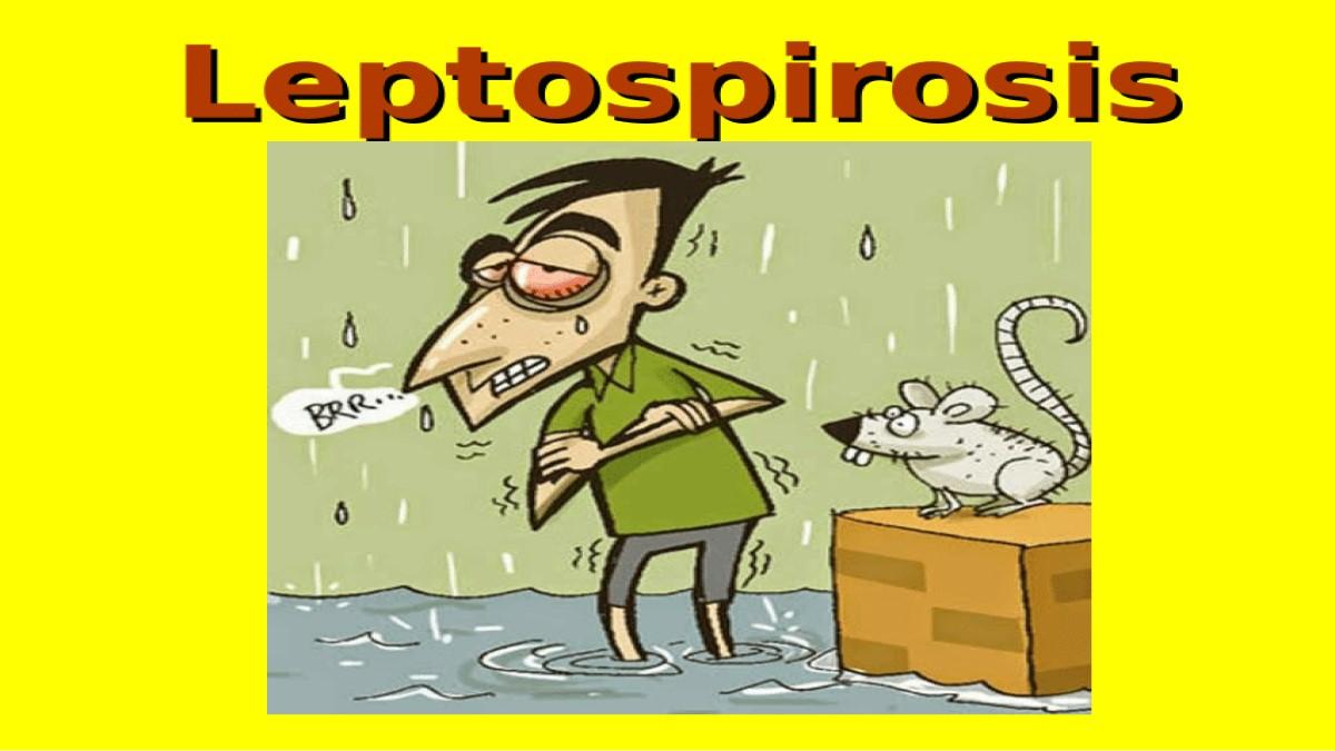 ¿Sabías que la Leptospirosis es transmitida por la orina de animales silvestres y domésticos?