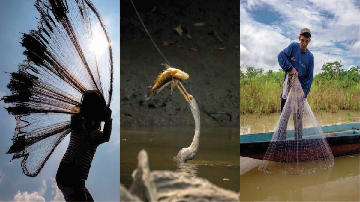 Investigación de Instituto Humboldt y Ecopetrol identificó 91 especies de peces en el río Sogamoso