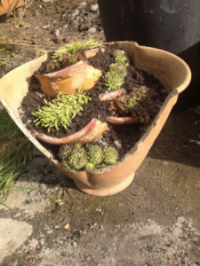 Picture of broken flower pot used to make functional attractive flower pot