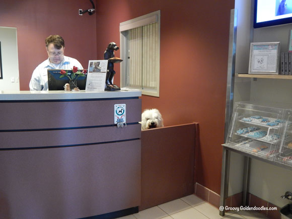 Leo hanging out behind the front desk with Scott at OTPR