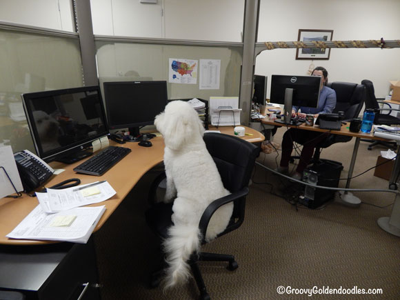 """He's thinking: """"I could work here, they probably have tasty benefits!"""""""