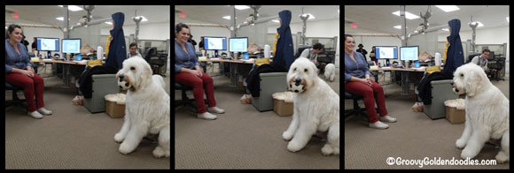 LEO-IN-THE-OFFICE