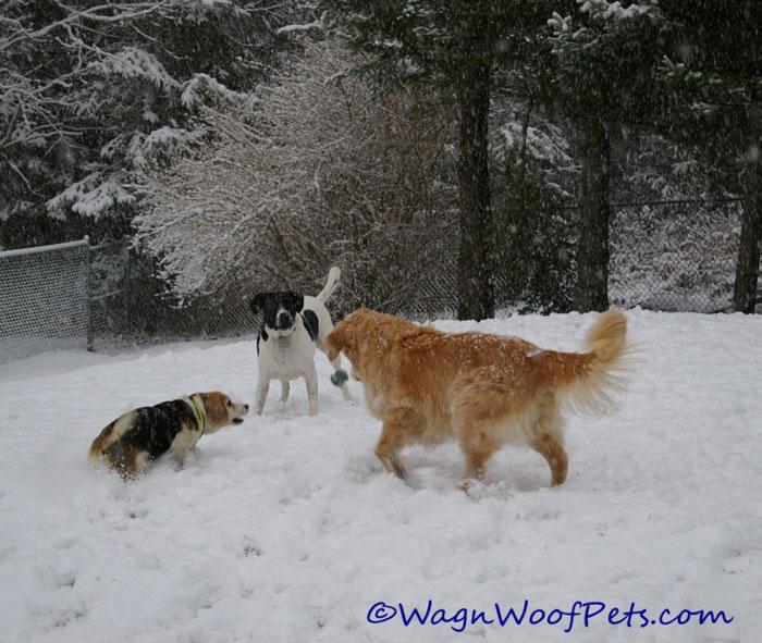 snow-play