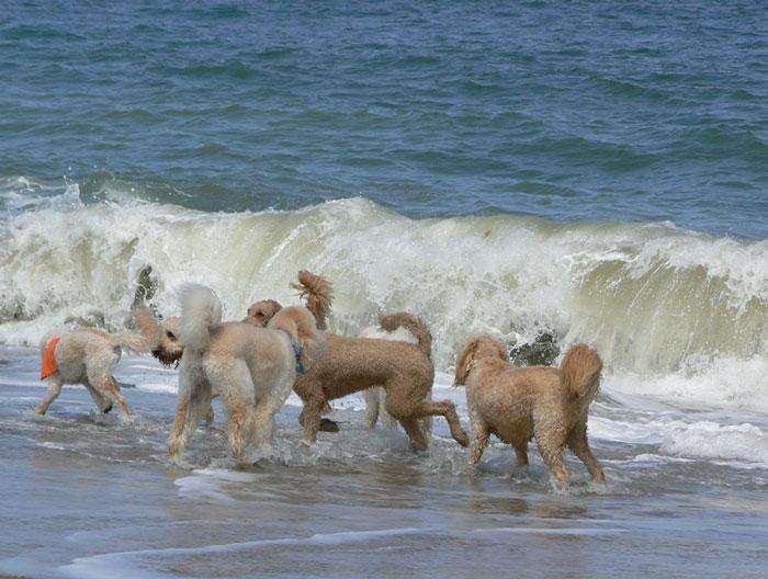 photo courtesy of doodlesindewey.com