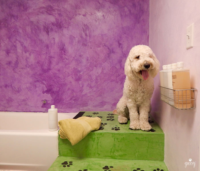 Bathing A Dog Groovy Goldendoodles