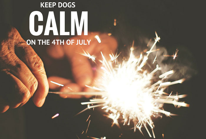 Keep dogs calm on the 4th of July