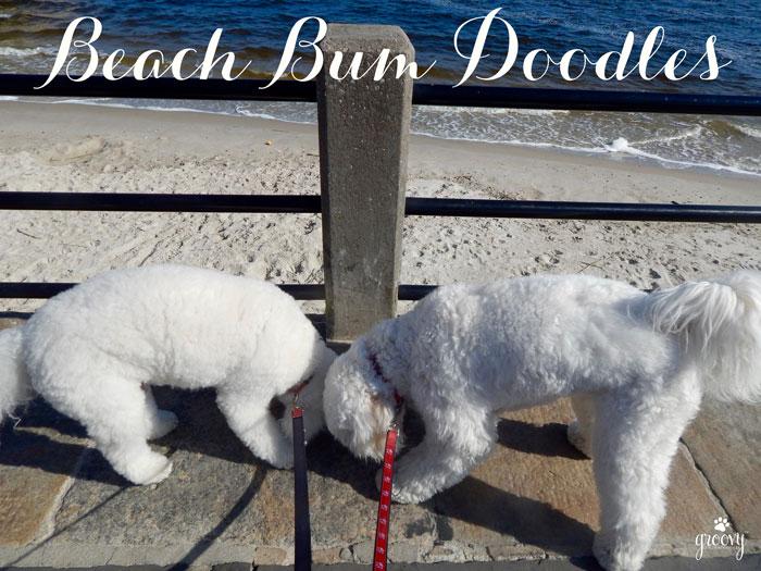 Beach Bum Doodles