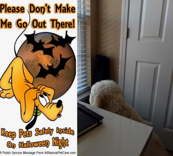 HALLOWEEN - KEEP PETS SAFE