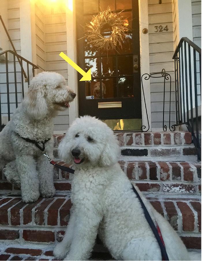 SHARING SWEET DOG TREATS
