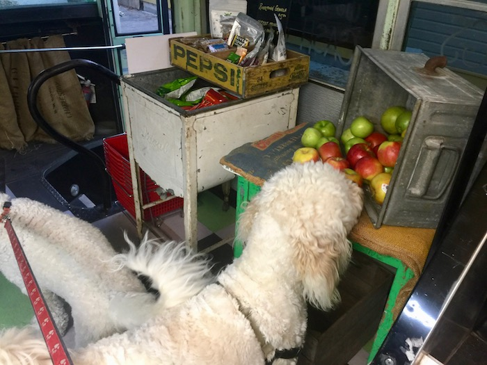 FRESH FRUITS FOR DOGS