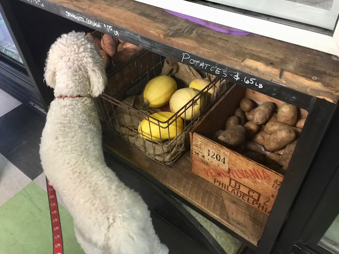 FRESH VEGGIES FOR DOGS