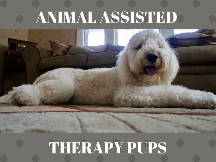 PET THERAPY JOB