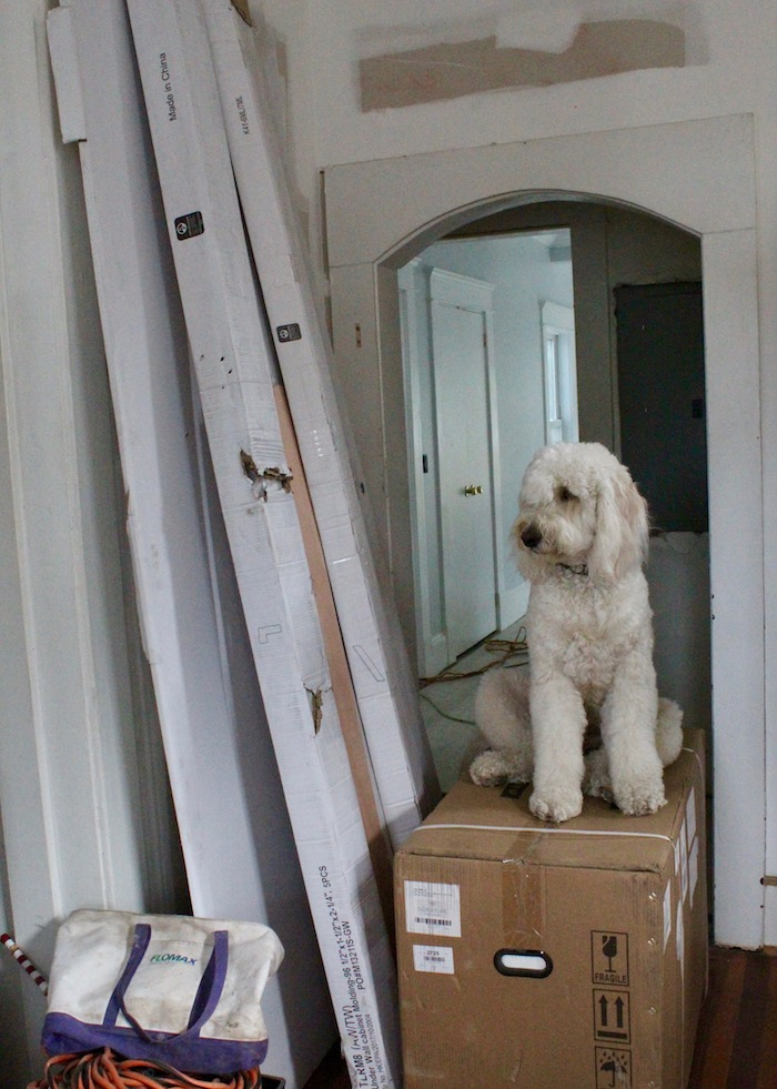 HOME RENOVATIONS WITH DOGS