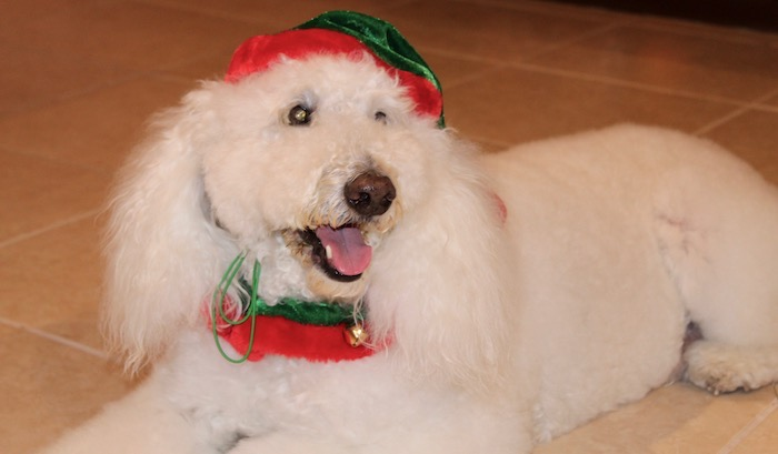 FESTIVE HOLIDAY CANINE ACCESSORIES