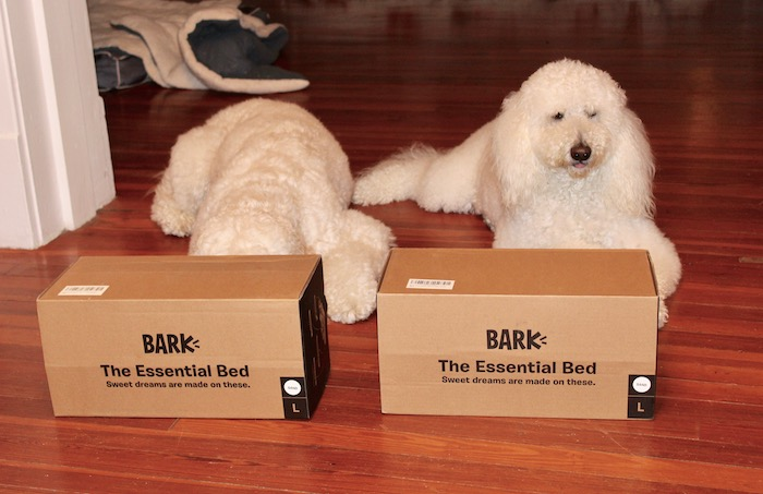 THE ESSENTIAL BED #BARKBOX