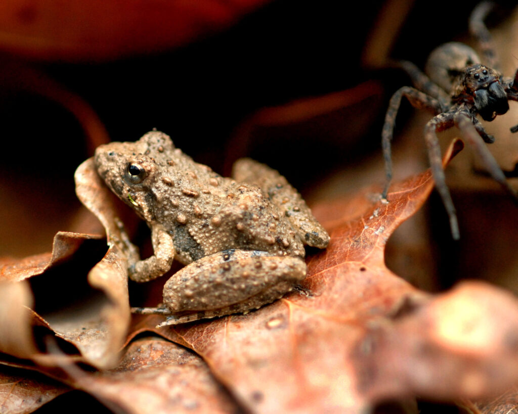 frog and spider