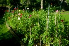 Bob-Leonelli-garden