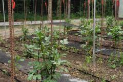 ChueyChandler-Garden-1