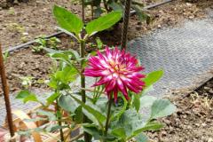 ChueyChandler-Garden-2