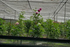 Late-Garden1
