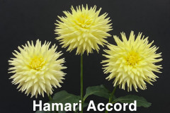 Hamari-Accord-2202———-Mooney-Triple