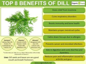 Top 8 Benefits of Dill