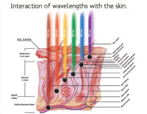 Interaction of LED Red Light Therapy wavelenghts with the skin. Different wavelenghts of Red, Blue, and Infra Red Lights penetrate the skin at different levels.