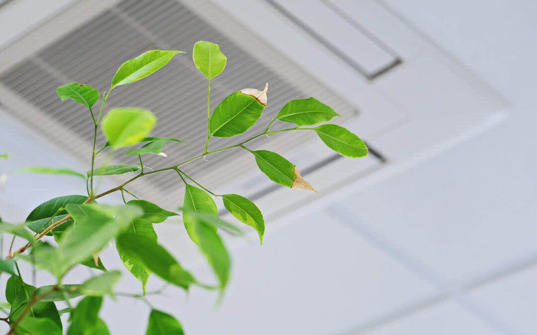 How healthy is the air in your home?