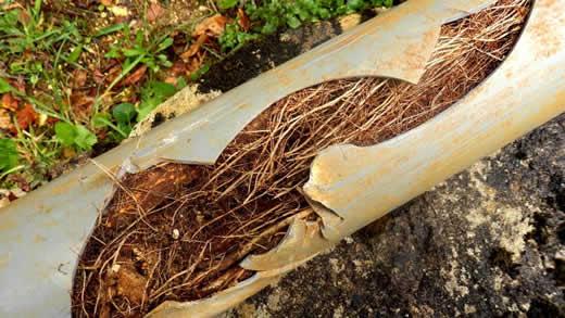 Residential Plumbing Tree Roots Traverse City Michigan