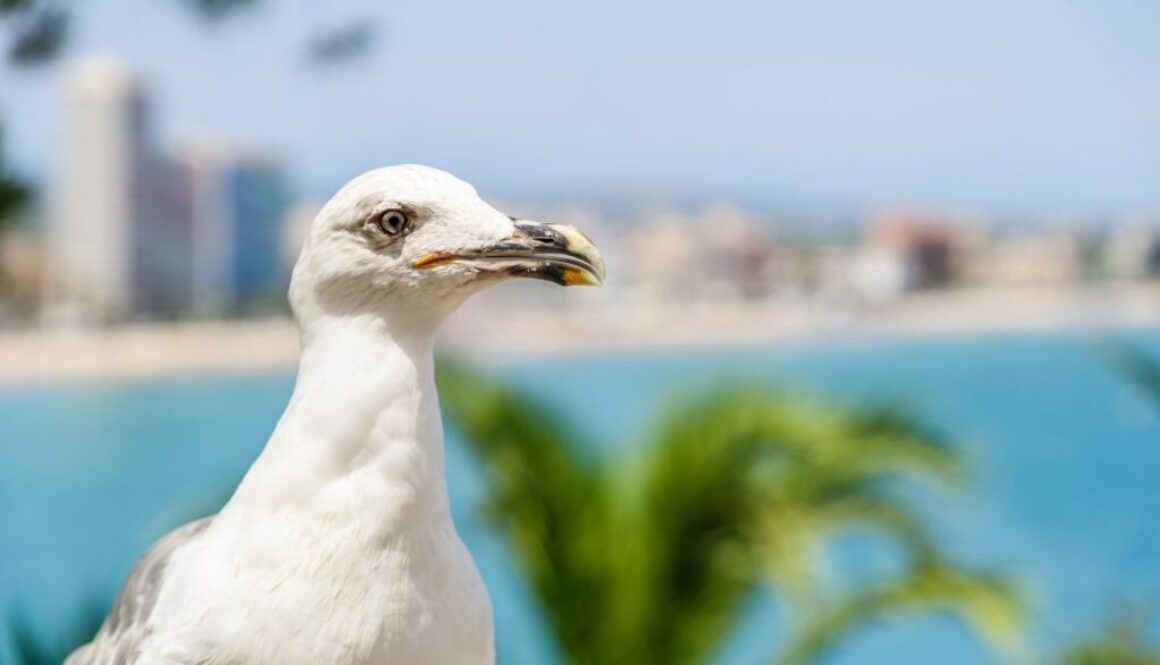 A seagull with the city of Boca Raton behind it.