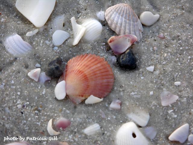 Shell treasures abound on Naples' beaches.