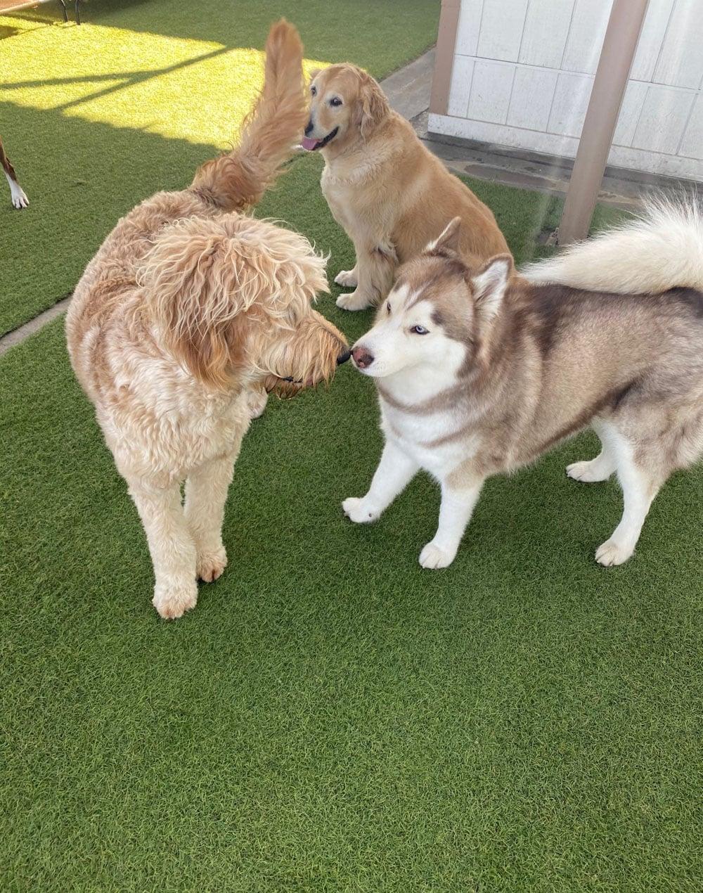 dogs resort gallery 10
