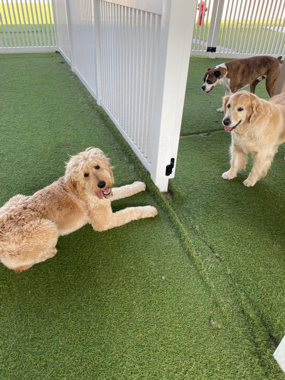 dogs resort gallery 11